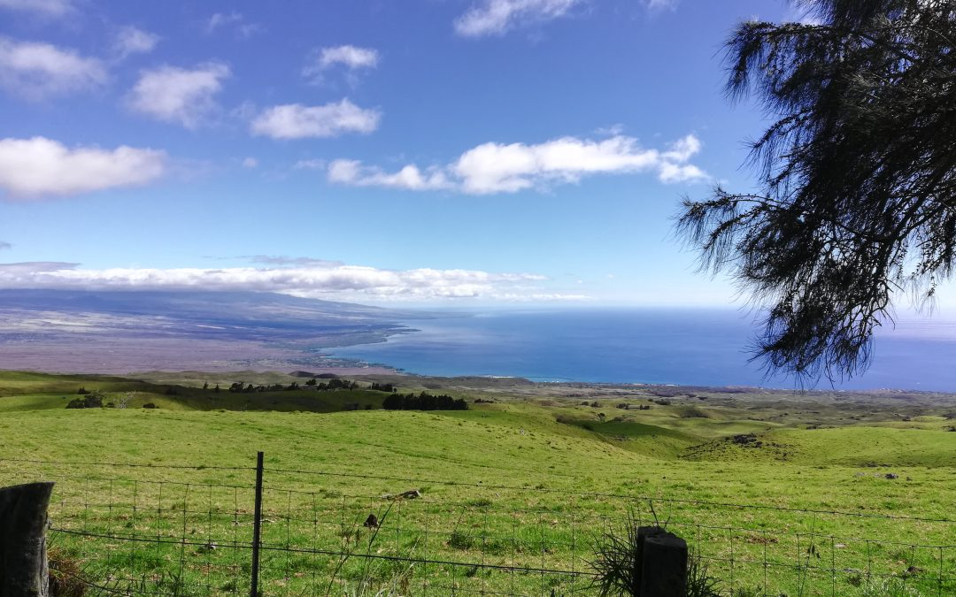 Writing & Grammar Level 4 student blog: What you miss in Hawaii?